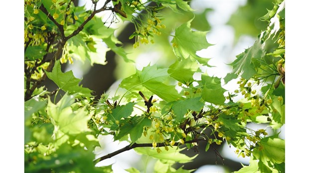 c l brer le printemps et planter un arbre le journal de joliette. Black Bedroom Furniture Sets. Home Design Ideas